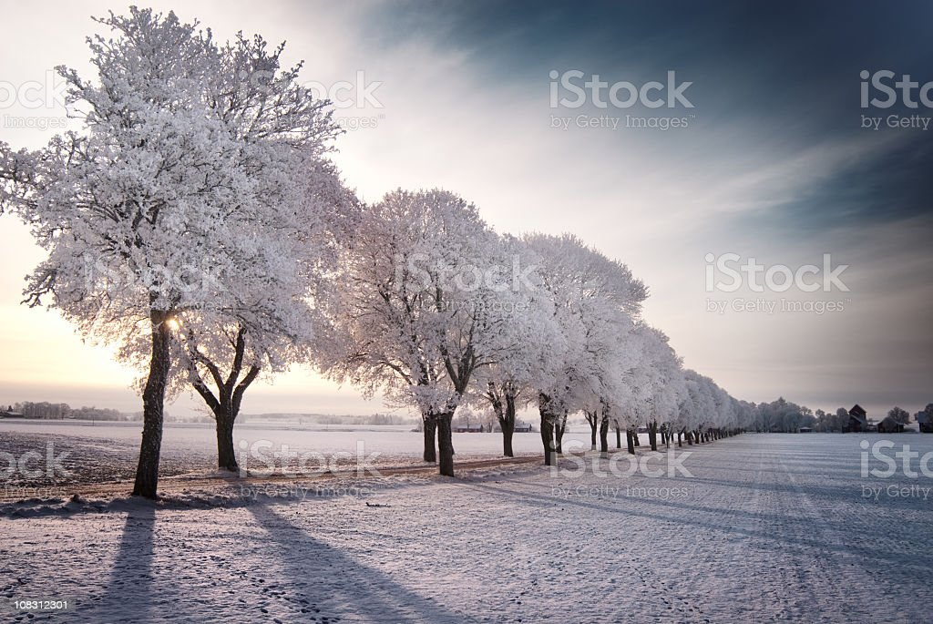 A field and trees covered in snow stock photo