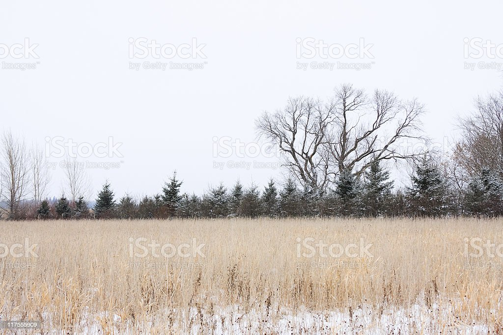 Field and Trees royalty-free stock photo