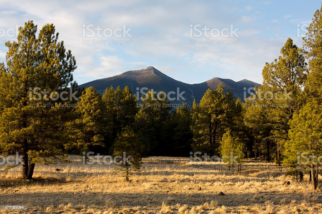 Field and view of the mountains of Flagstaff, Arizona stock photo