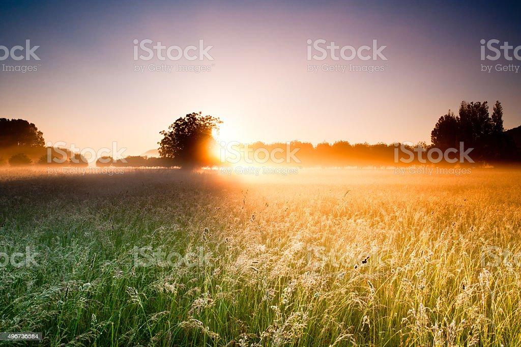 Field and Walnut trees stock photo