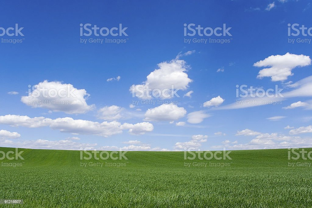 Field at spring royalty-free stock photo
