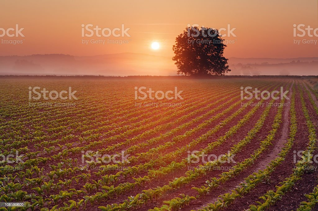 field at sunrise stock photo