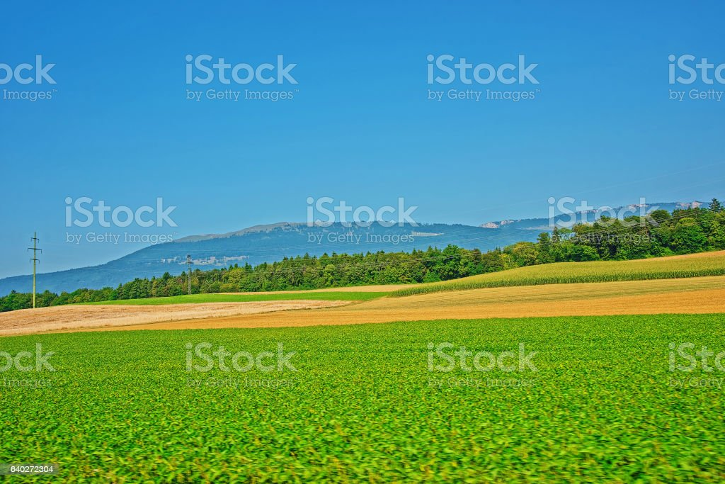 Field at Yverdon les Bains Jura Nord Vaudois Vaud Switzerland stock photo