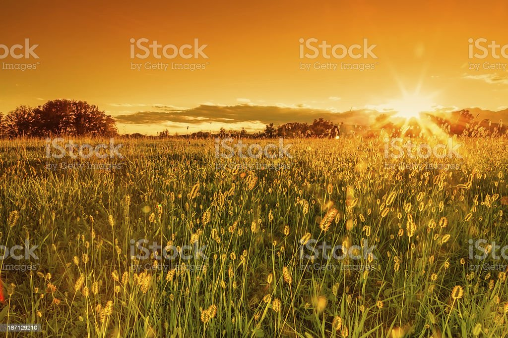 Field background in sunny day outdoor royalty-free stock photo