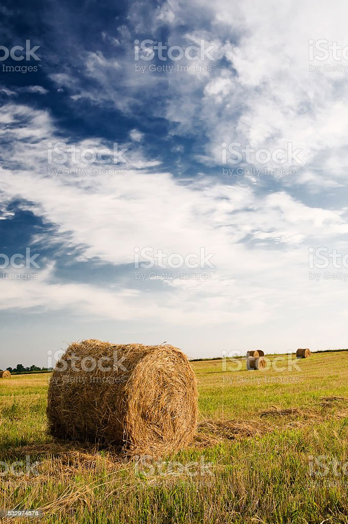 Field, bales and amazing blue sky with white clouds. stock photo