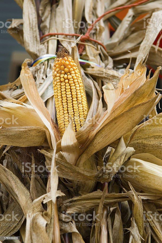 Field Corn Decoration stock photo