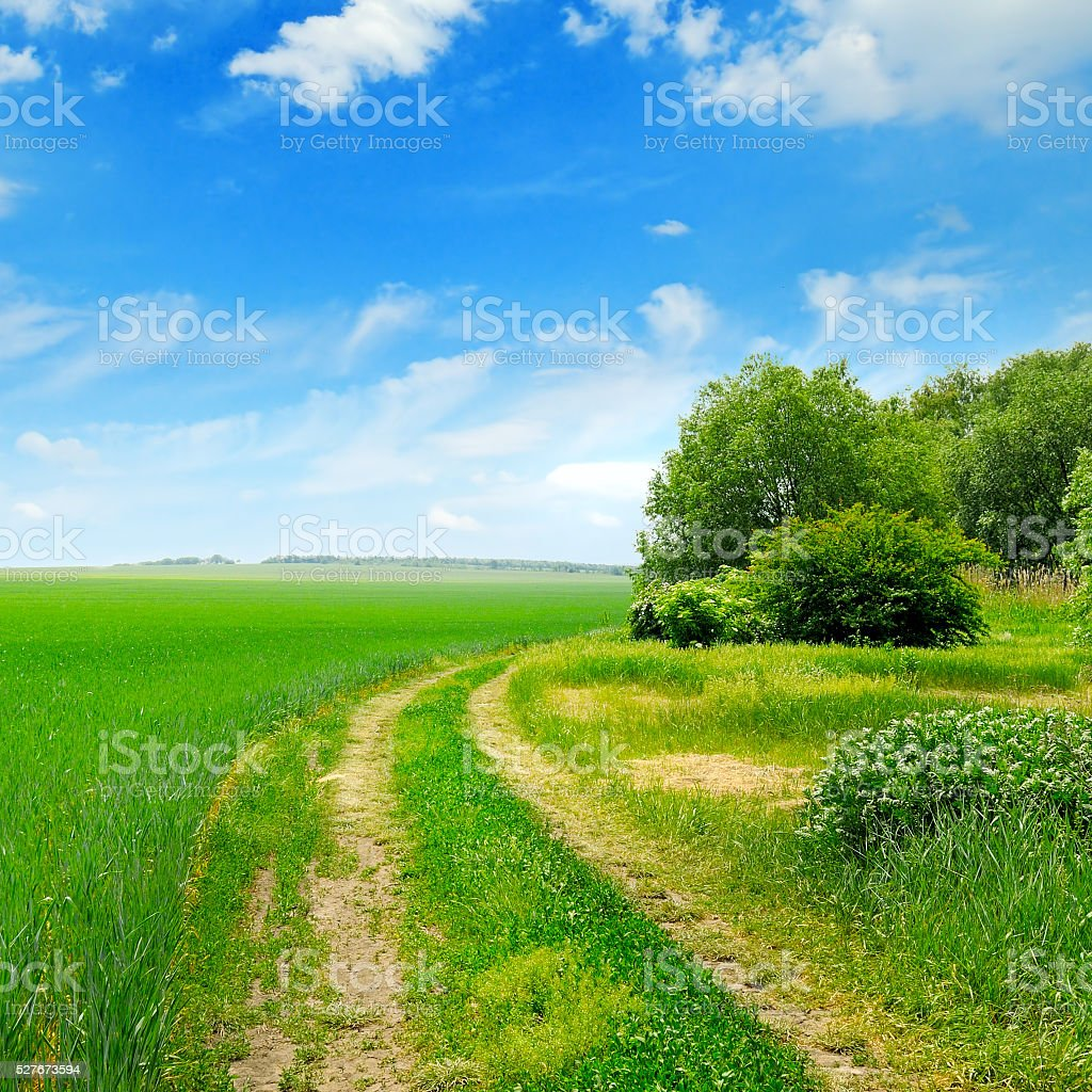 field, country road and  blue sky stock photo