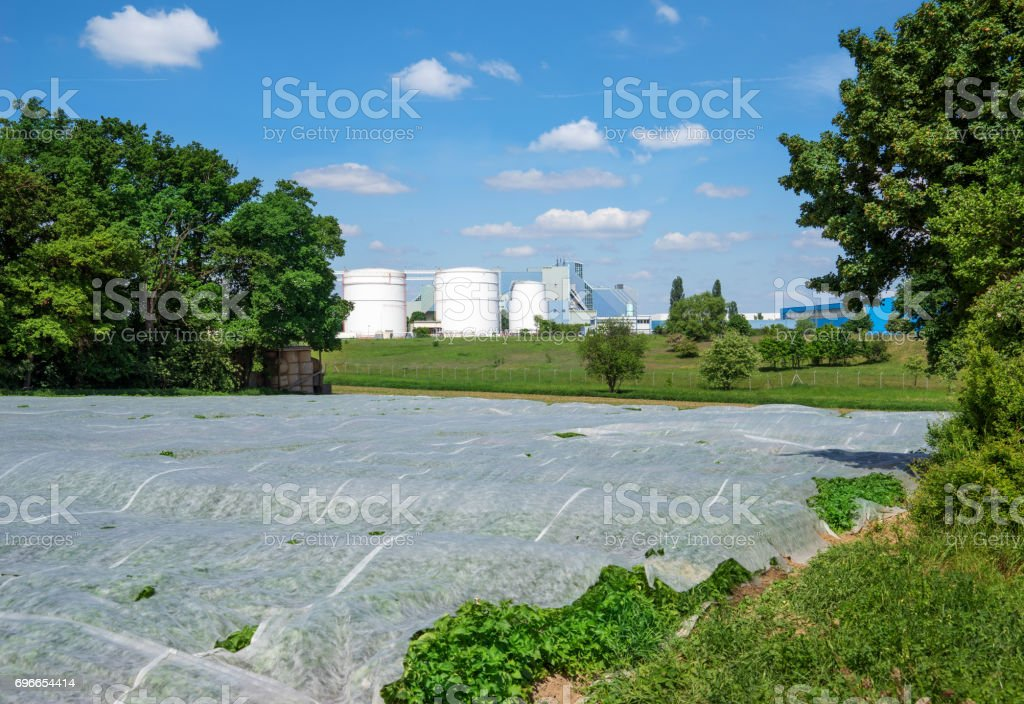 Field covered with nonwoven stock photo