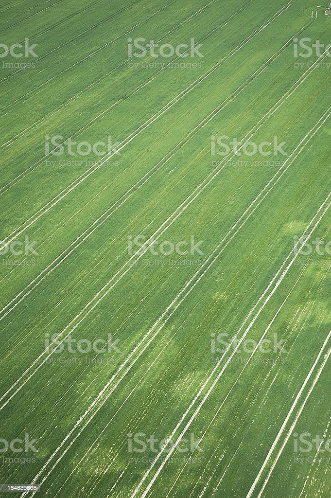 field crops royalty-free stock photo