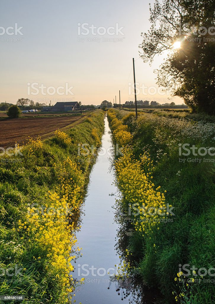 Field drains on the Somerset Levels stock photo