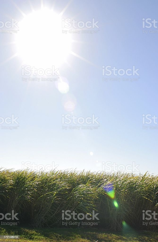 Field Flare royalty-free stock photo