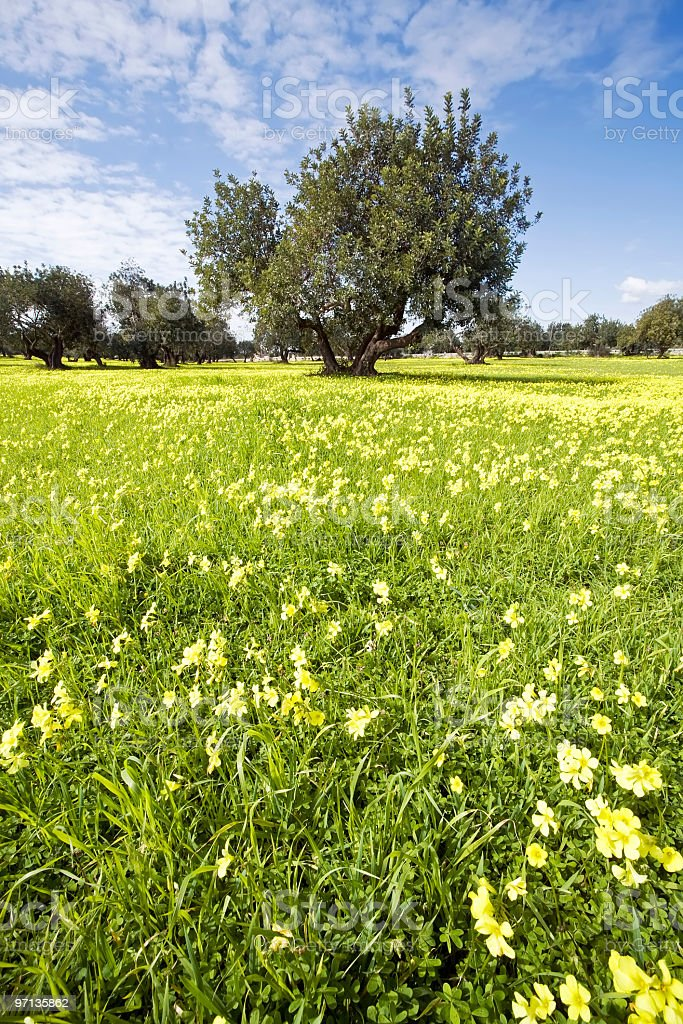 field flourished with green trees in spring stock photo
