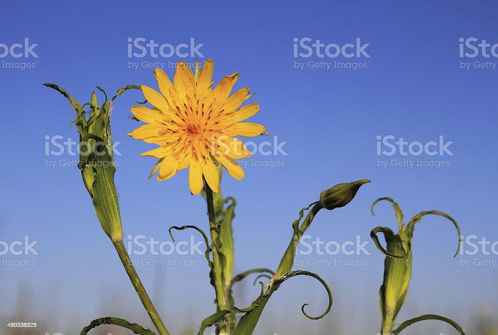 Champ de fleurs. photo libre de droits