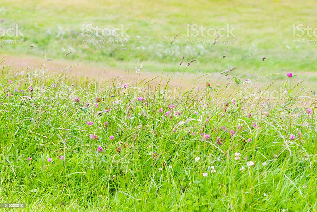 Field grass summer landscape stock photo