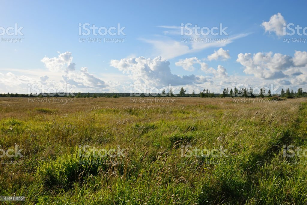Field grasses around rural roads to Vyritsa between field and fo stock photo