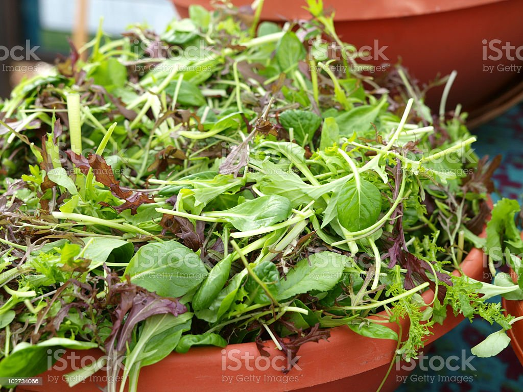 Field Greens in bowl at Market royalty-free stock photo