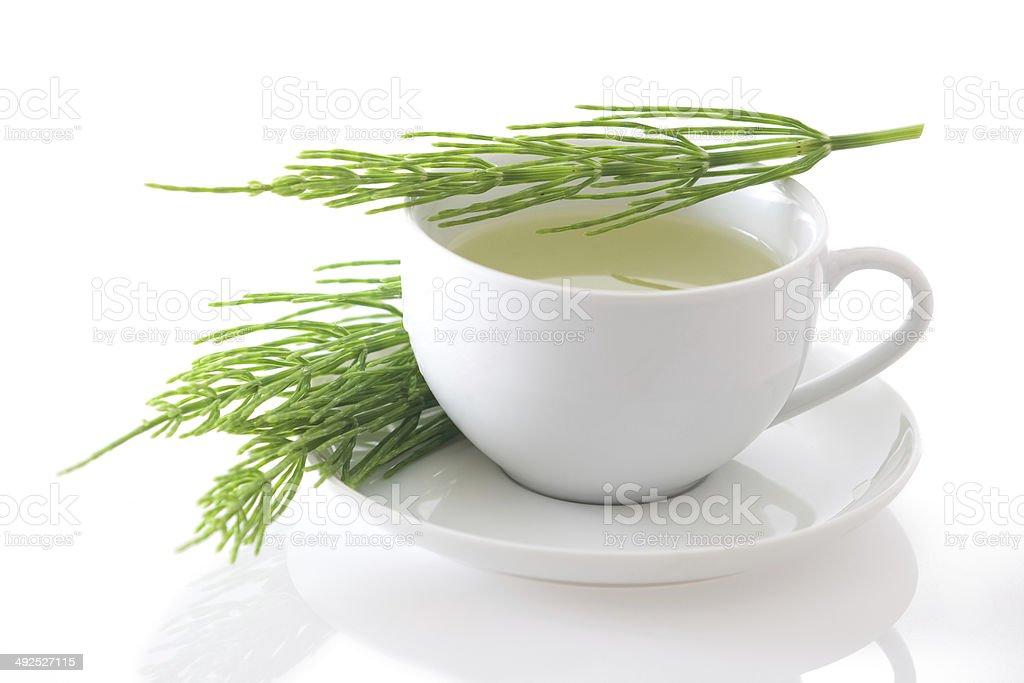 Field horsetail (Equisetum arvense) tea isolated stock photo