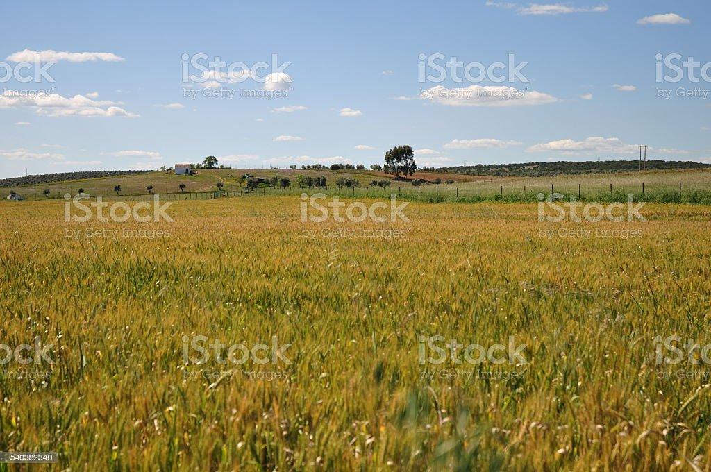 Field in alentejo stock photo