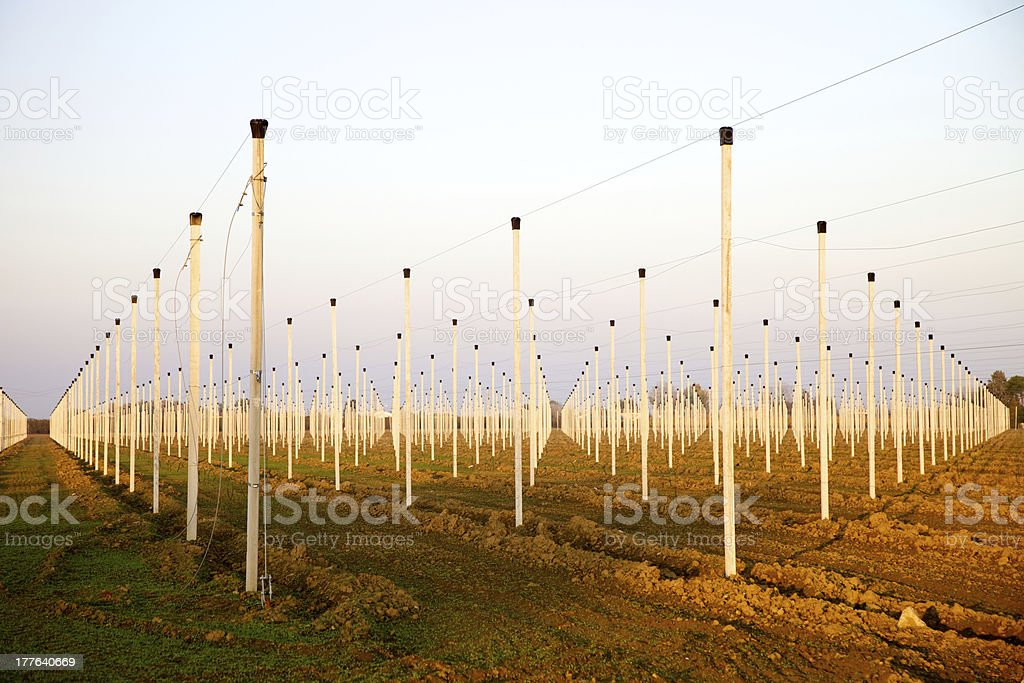Field in autumn royalty-free stock photo