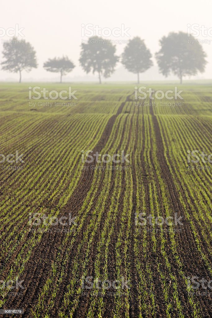 Field in fog. royalty-free stock photo
