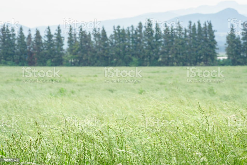 Field in Jeju island stock photo