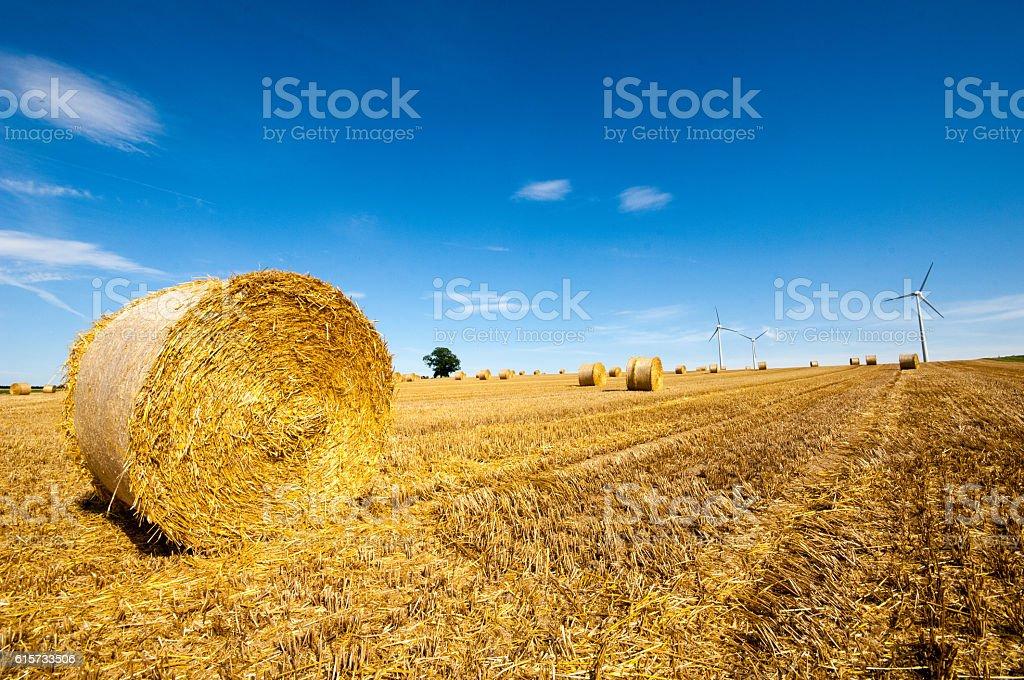 Field in Rhenish Hesse, (Rheinhessen) Rhineland Palatinate, Germany stock photo