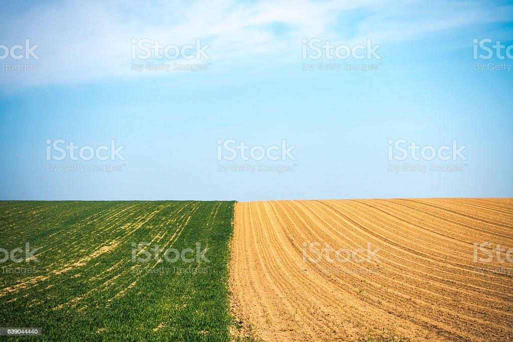Field In Spring stock photo
