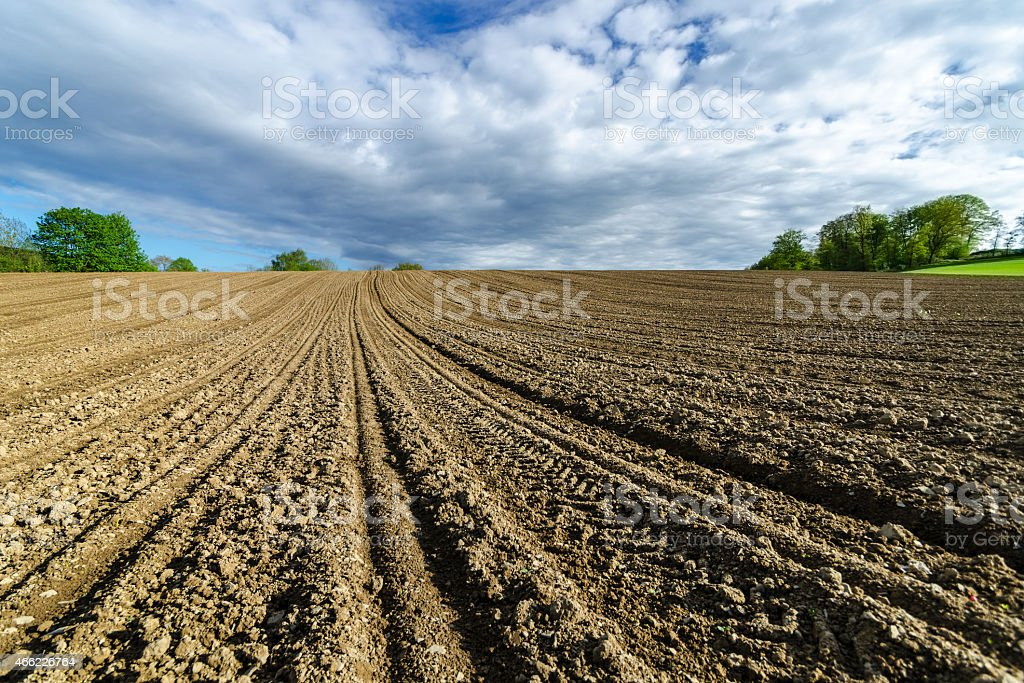 Field in spring, ready for sowing stock photo