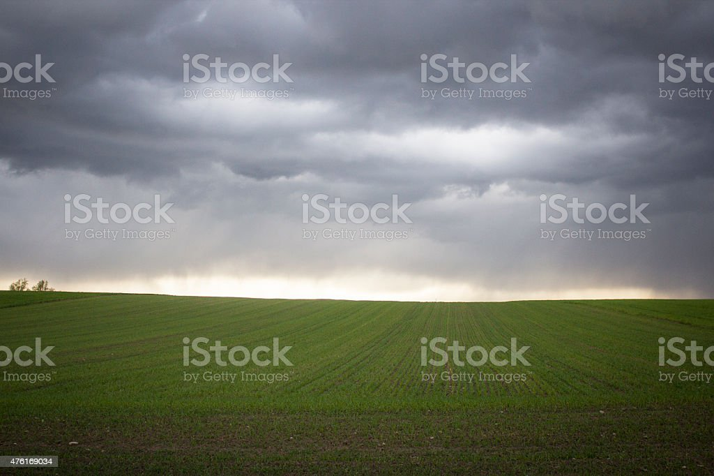 Field in stormy weather stock photo