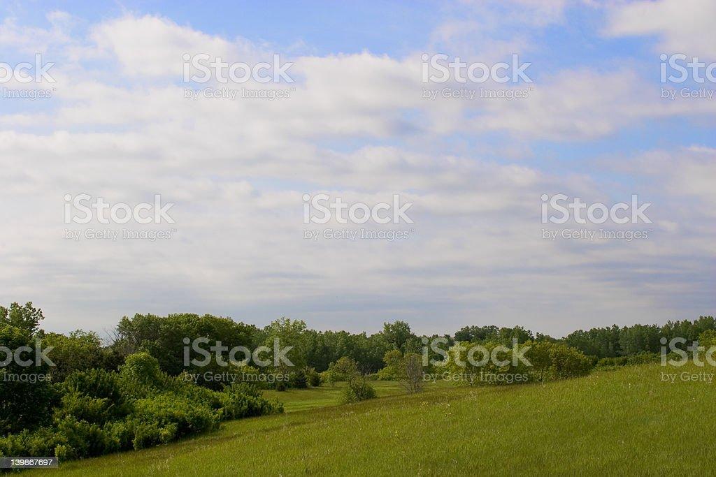 Field in Summer stock photo