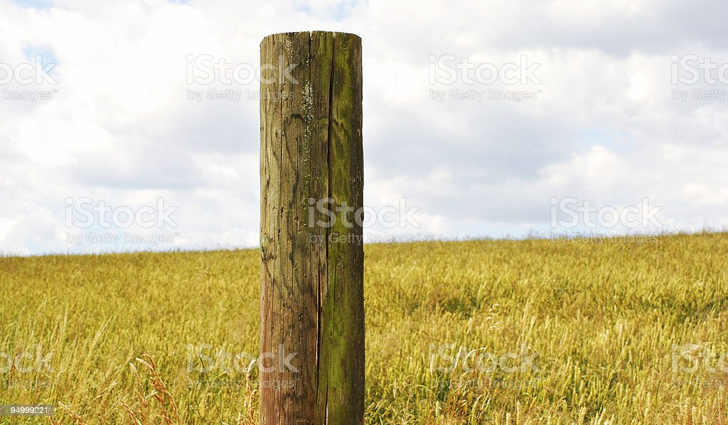 field in summer stock photo