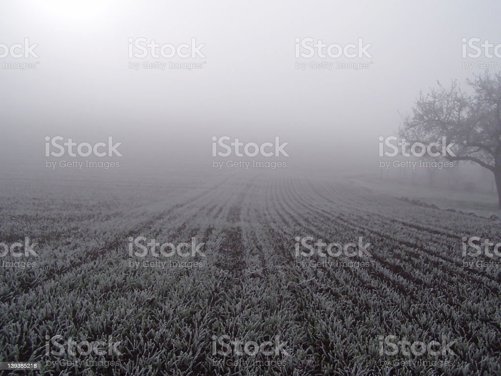 Field in the fog. stock photo