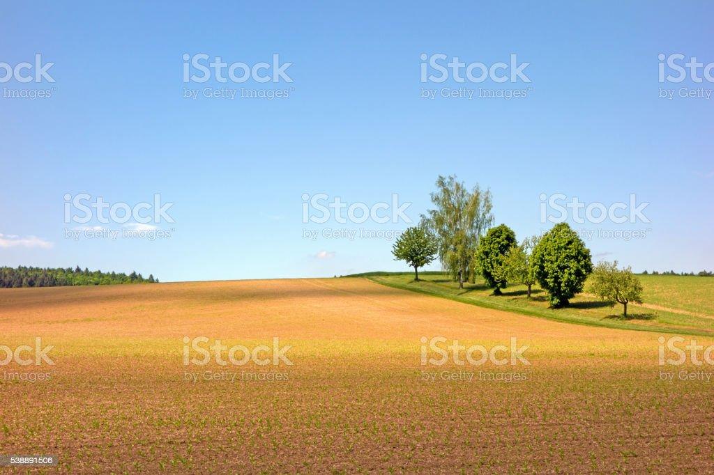 Field in the Kraichgau stock photo