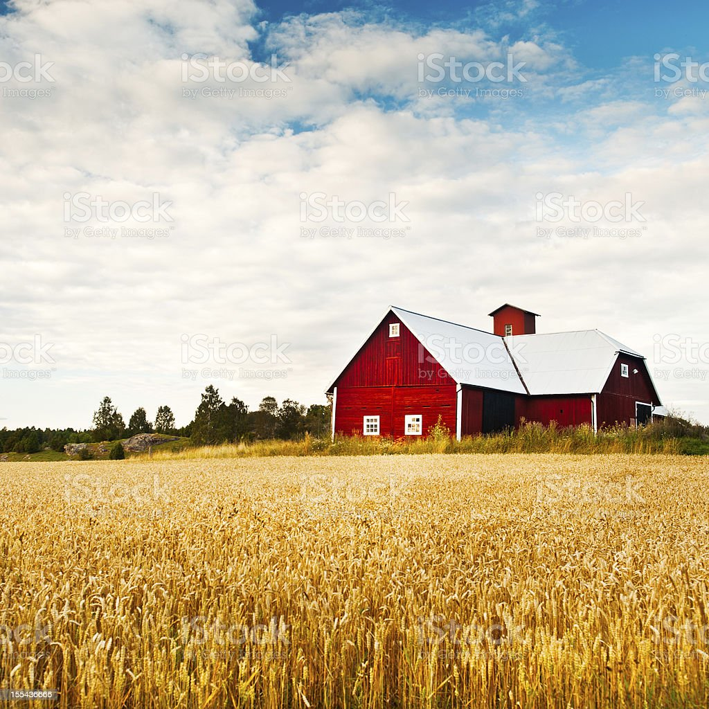 Field in the summer with very large red barn stock photo