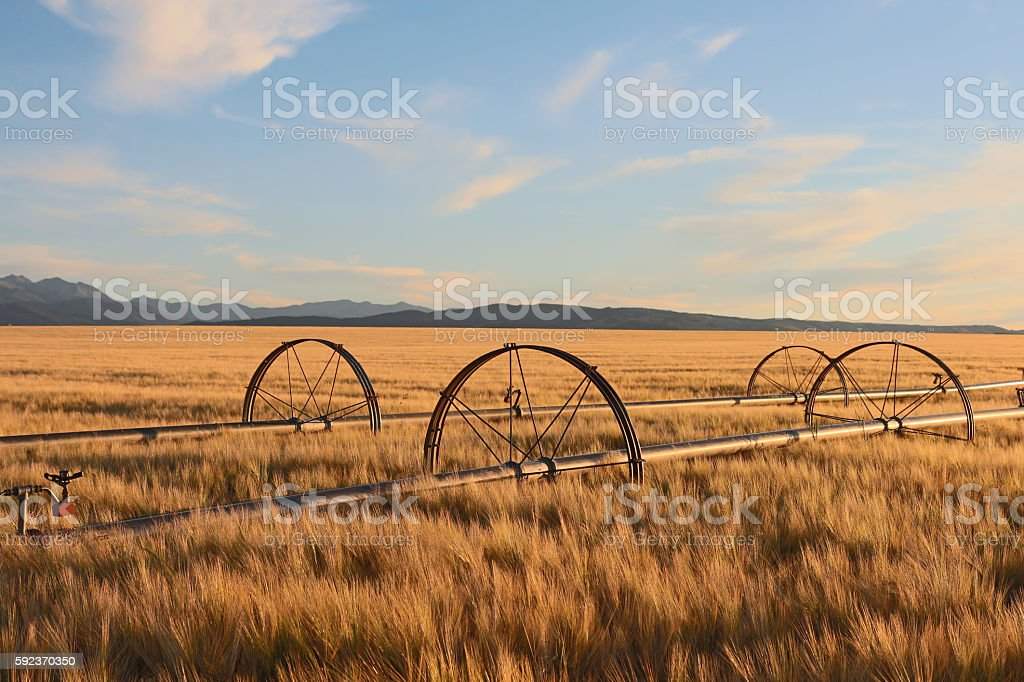 Field Irrigation System, Montana stock photo