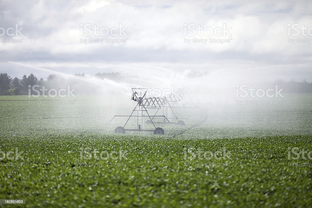Field Irrigation System Spraying Water over Soybean Cropland stock photo