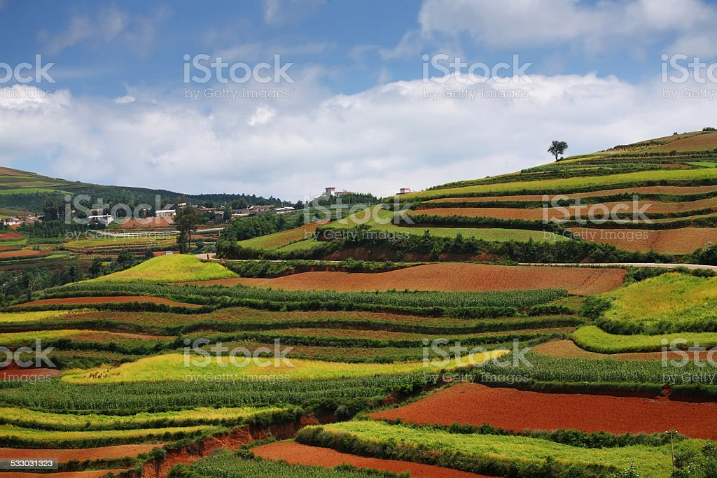 Field Landscape in Yunnan Province, China stock photo