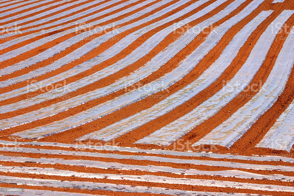 field lines royalty-free stock photo