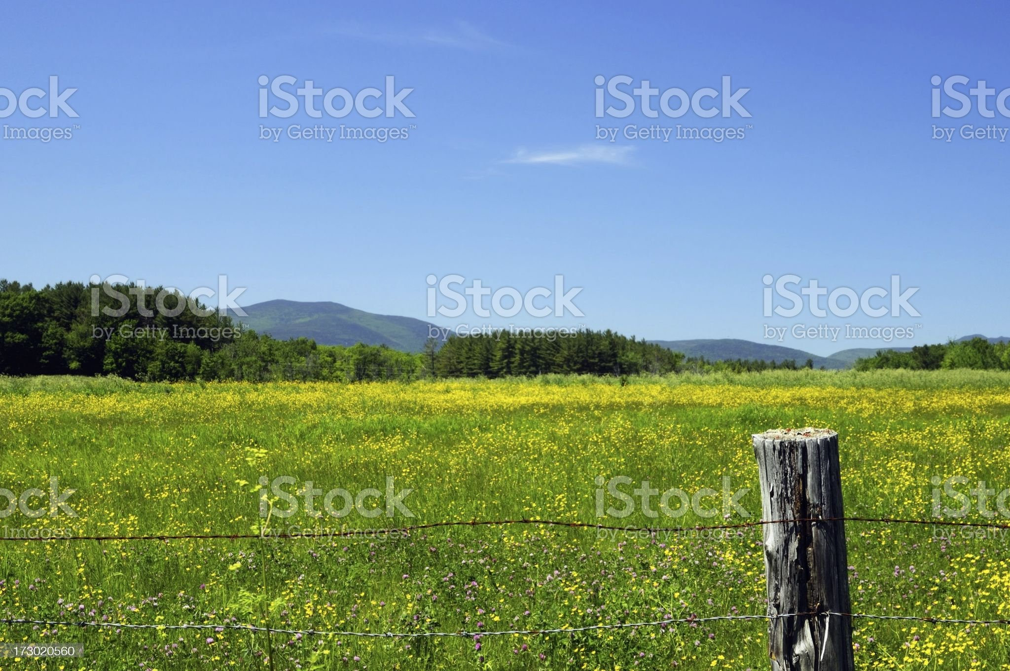 Field mountains and wildflowers royalty-free stock photo