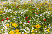 Field Of a Variety of Multicolored Wild Flowers