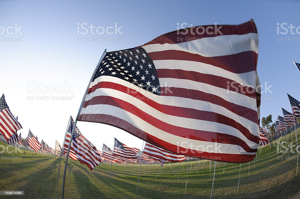 field of american flags wide angle royalty-free stock photo