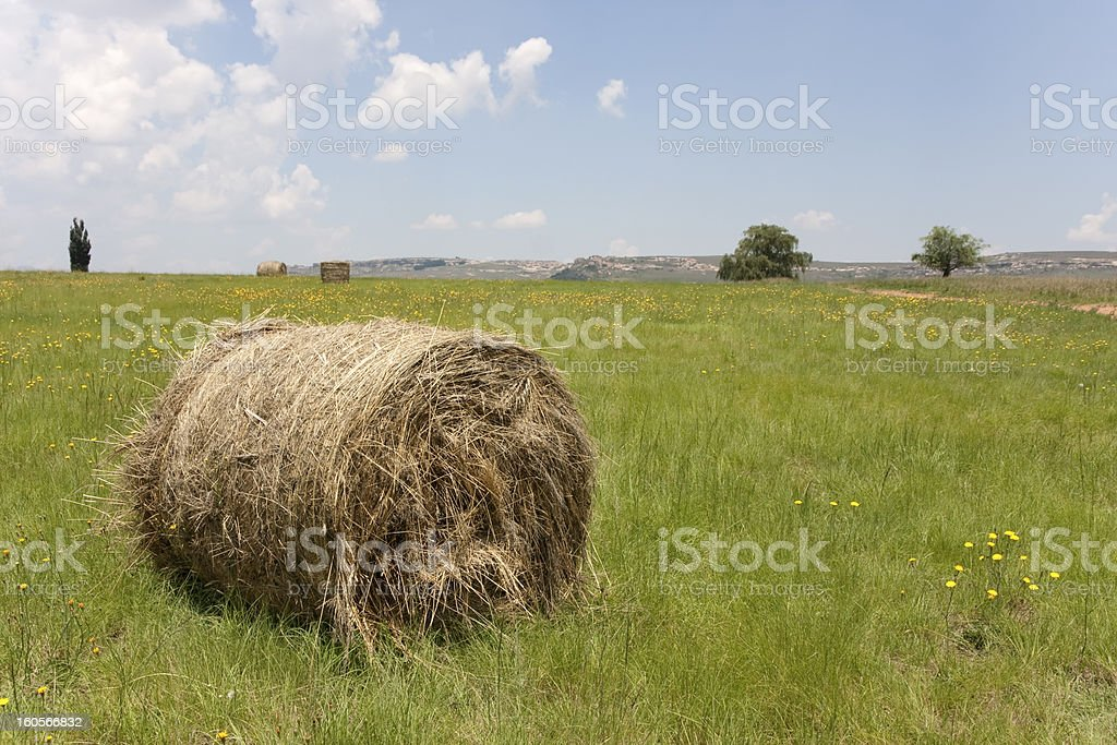 Field of bales and dandelion flowers in South Africa royalty-free stock photo