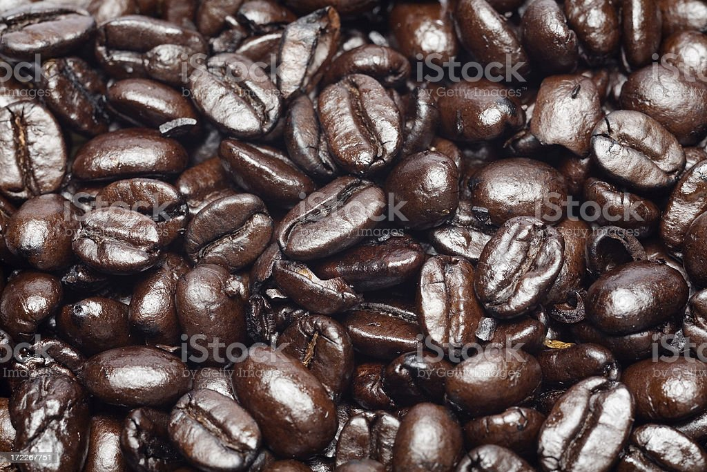 Field of coffee Beans stock photo