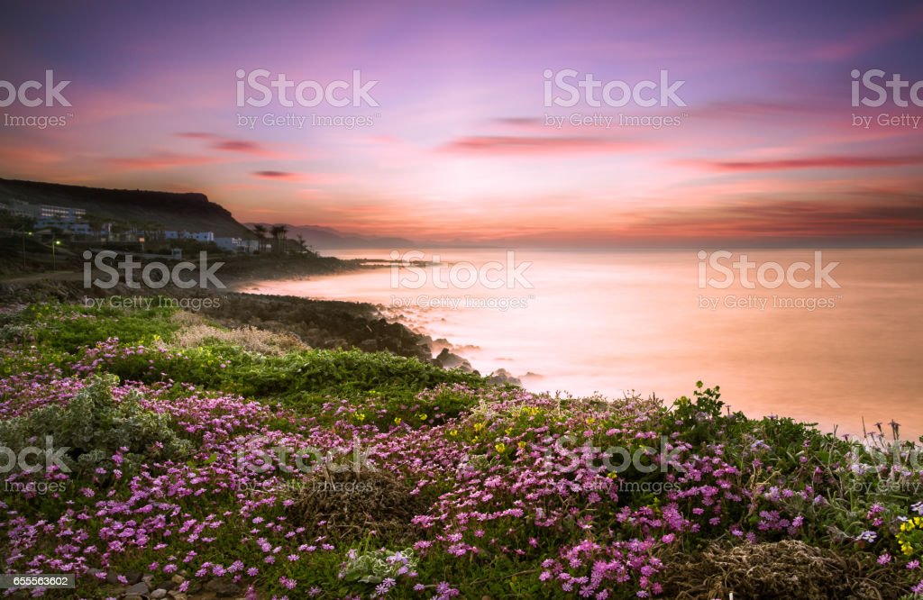 A field of colorful flowers with sea and sunset at the background, Milatos, Crete, Greece. stock photo