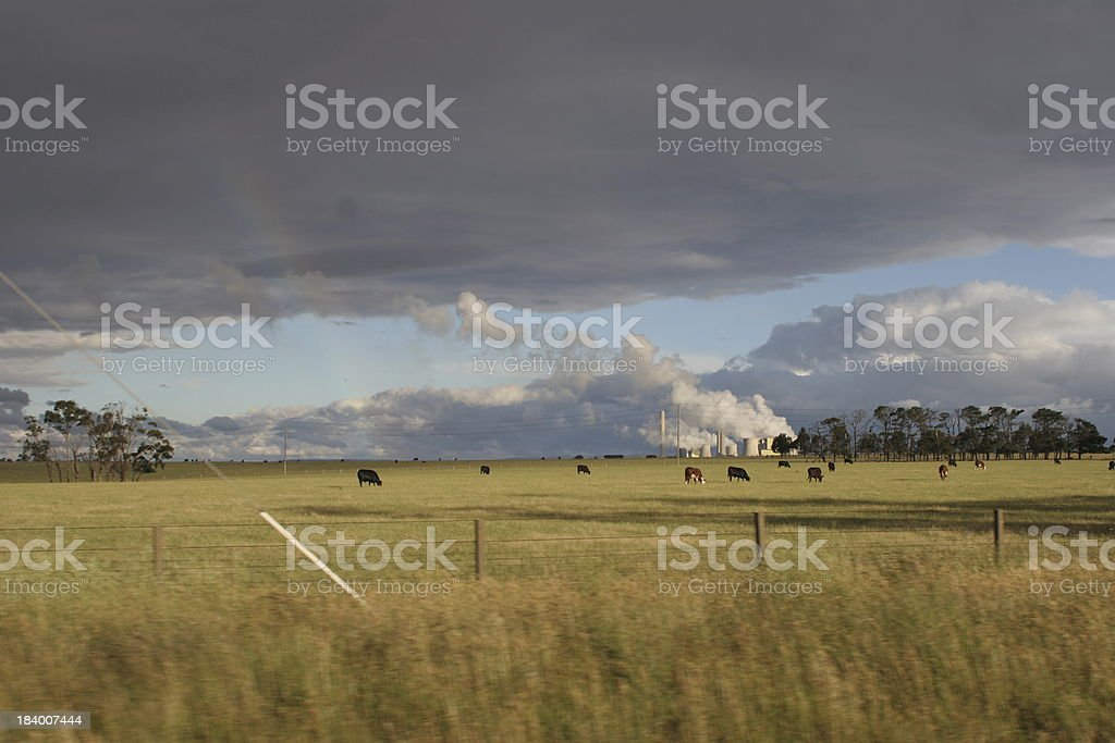 field of cow royalty-free stock photo