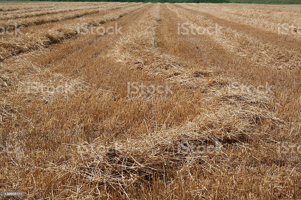 field of cropped hey royalty-free stock photo