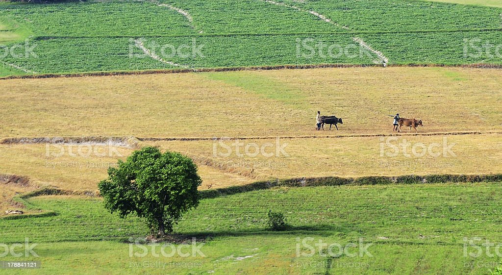 Field of crops after harvesting stock photo