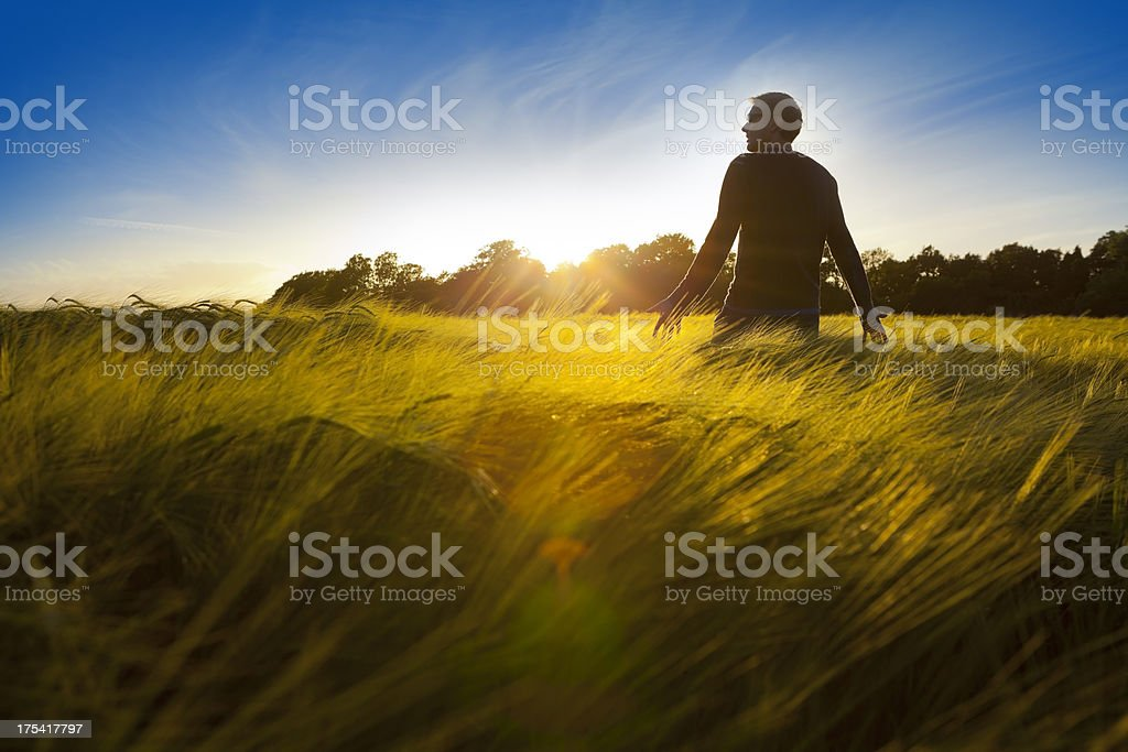 Field of Dreams stock photo
