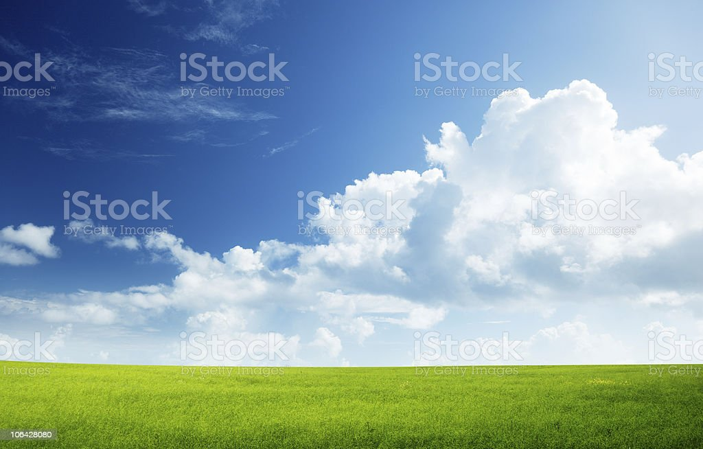 field of flax and perfect sky royalty-free stock photo