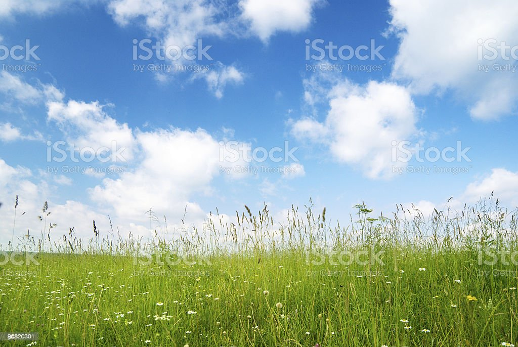 field of flowers and sunlight royalty-free stock photo